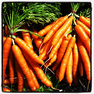 Urban Eden Farm carrots